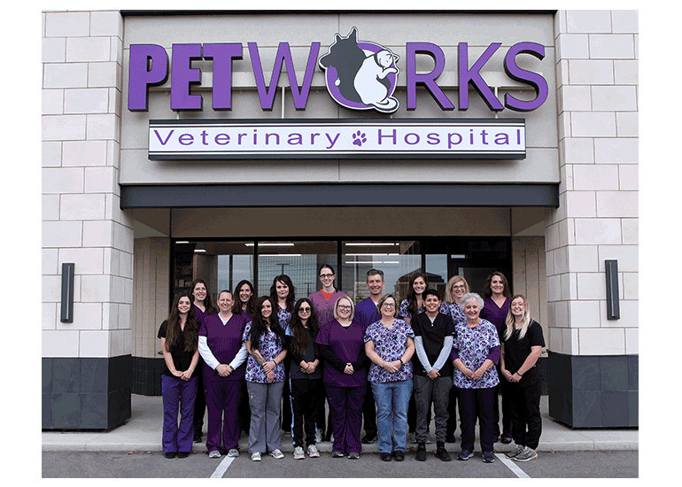 veterinary clinic in overland park kansas petworks kc vet hospital